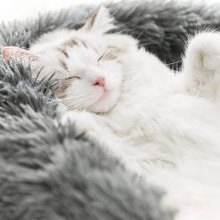 panier-pour-dormir-chat