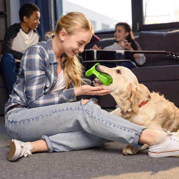 Jouet brosse à dent chien