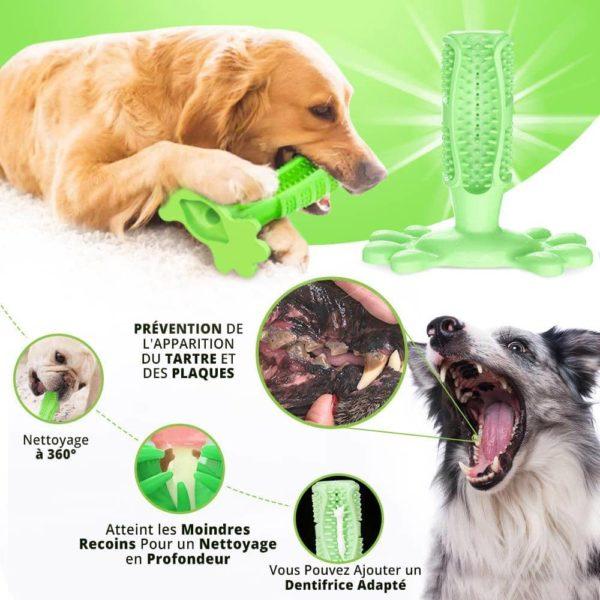 Dents du chien propres