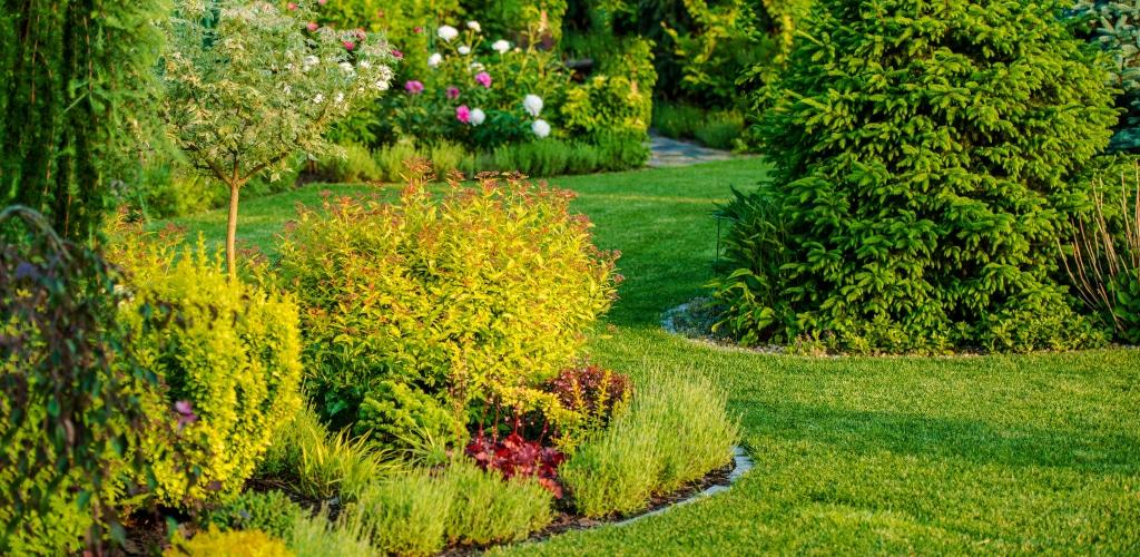 comment-dessiner-jardin