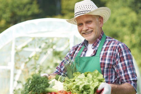 planter-legumes