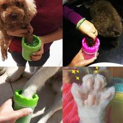 Nettoyer pattes chien apres promenade