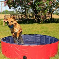 Baignade pour chien boomattitude.com